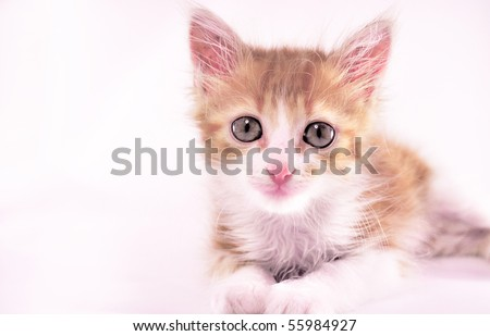 red-haired kitten with pink nose laying on white background
