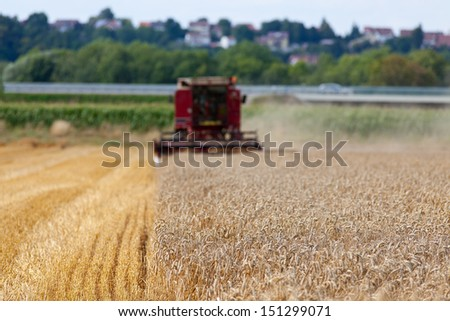 Red harvester at work on a cornfield