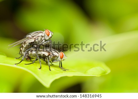 Red head flies are breeding on green leaf,love and romantic concepts