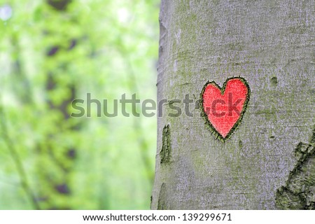 red heart engraved in the tree - stock photo