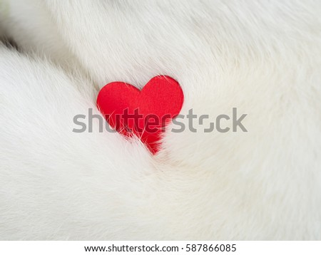 Red heart on white cat hair for love Valentines day background.