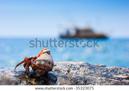 Red hermit crab coming out from it's hell with boat in the background - stock photo