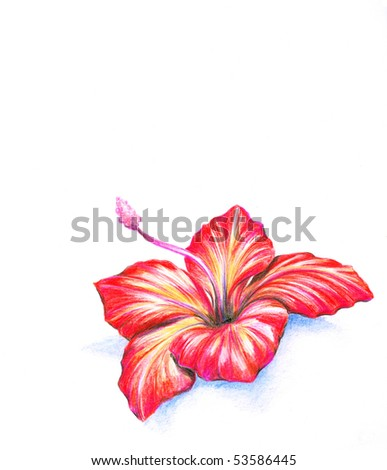 Red hibiscus flower.Picture I have created myself with colored pencils. - stock photo