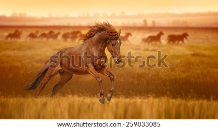 Red horse galloping, jumps in the grass lit by the rays of dawn. Stallion against the backdrop of a herd of horses. - stock photo