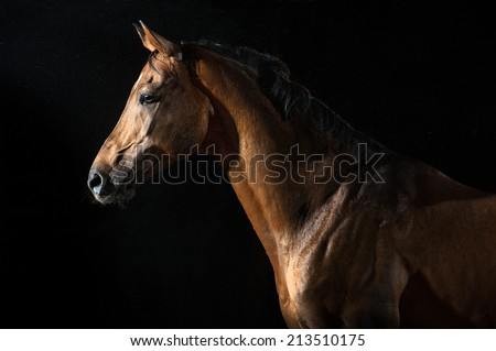Red horse in the night under the rain, studio shoot - stock photo