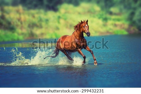 red horse is running across the blue lake - stock photo