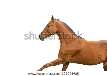 Red horse isolated on white background. - stock photo