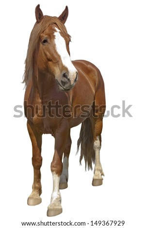 Red horse on a white background. Isolate. - stock photo