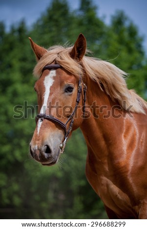 Red horse running to the green, sunny, summer meadow - stock photo