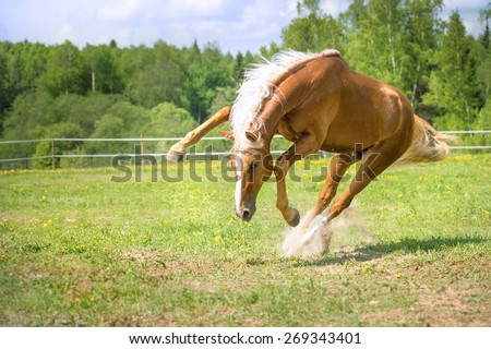 Red horse runs gallop in summer time - stock photo