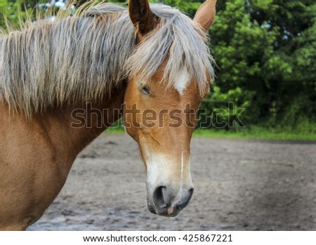 red horse  with a white blaze on the head and a gray mane standing in the sand next to the green trees