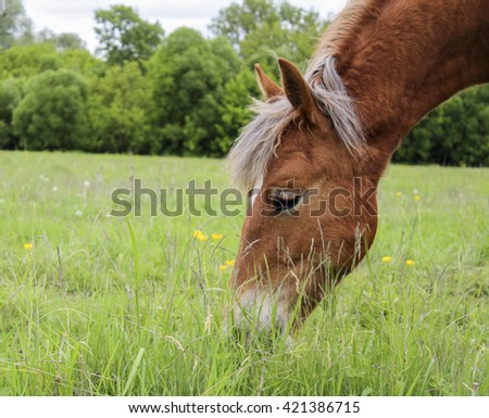 red horse with a white spot on his head and a gray mane eating green grass on a background of trees
