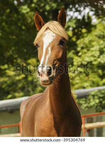 red horse with the white blaze on the head on the green leaves background