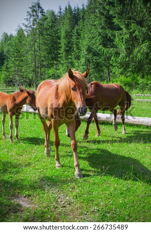Red horses in peaceful Carpathian village.