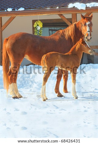 red horses on winter background - stock photo
