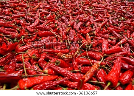 Red hot chili peppers drying unde the sun - stock photo