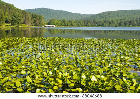 Red House Lake, hills and lily pads - stock photo