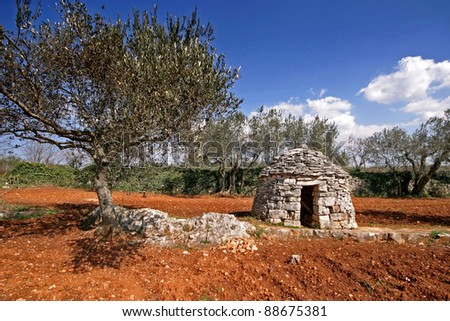 Red Istrian soil, stonemade shelter and olive trees - stock photo