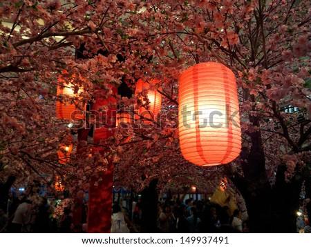 red japanese lanterns under sakura tree - stock photo