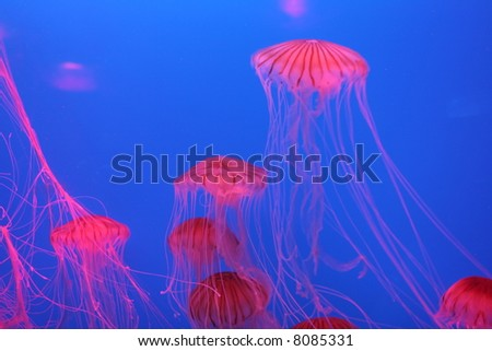 Red jellyfish in Hong Kong - stock photo