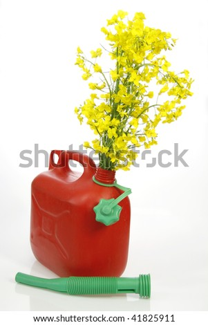 Red jerrycan with yellow blooming rapeseed over white background