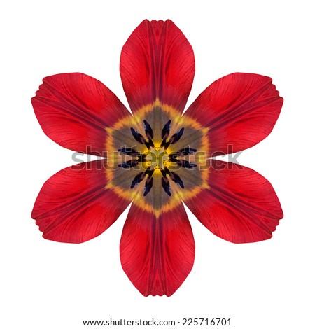 Red Kaleidoscopic Lily Flower Mandala  Isolated on White Background. Beautiful Natural Mirrored pattern - stock photo