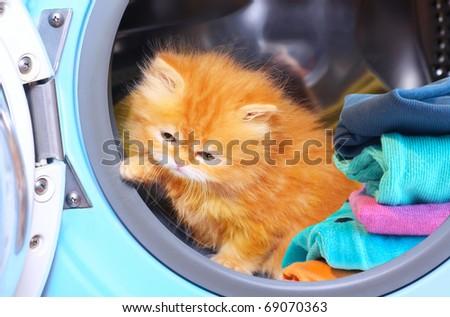 Red kitten in open washing machine. - stock photo