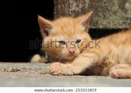 Red kitten lying and looking - stock photo