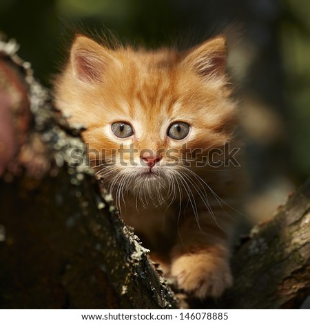 Red kitten on the tree - stock photo