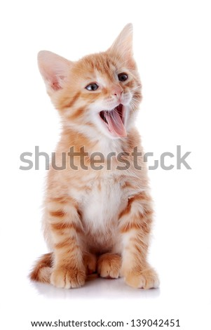 Red kitten. Sitting cat. Kitten on a white background. Red striped kitten. Small predator.