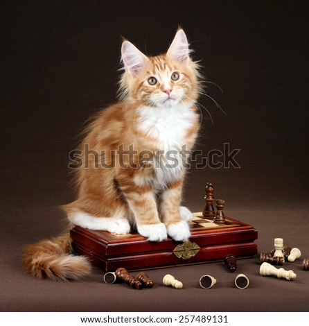 Red kitten sitting on a chessboard - stock photo