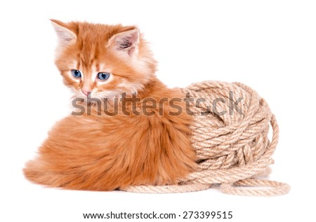 Red kitten sitting playing with a ball of yarn isolated on a white background - stock photo