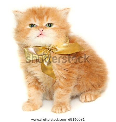 Red kitten with gold bow on a white background - stock photo