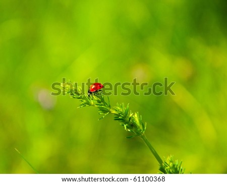 Red ladybird walking on green - stock photo