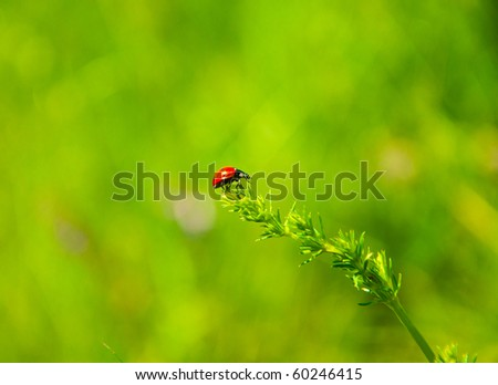 Red ladybird walking on green grass blade - stock photo
