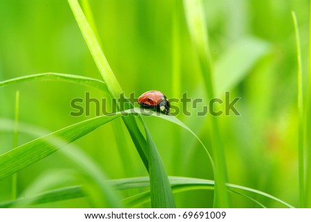 red ladybug on green grass - stock photo