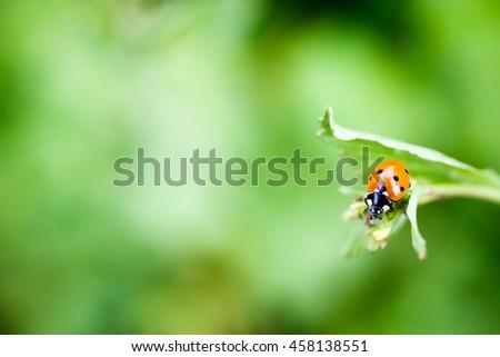 Red ladybug on green leaf - stock photo