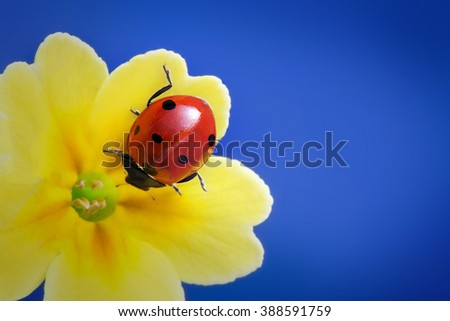 red ladybug on yellow flower