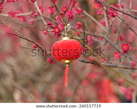 Red lantern in plum blossoming in spring - stock photo