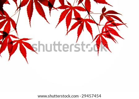 red leaf background - stock photo