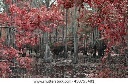 RED LEAF BAYOU