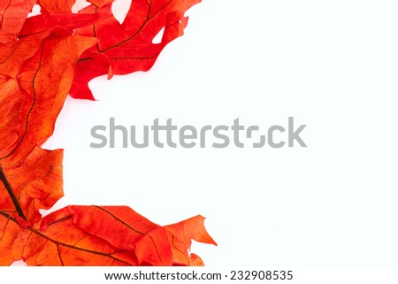 Red leaf border on white, room for text