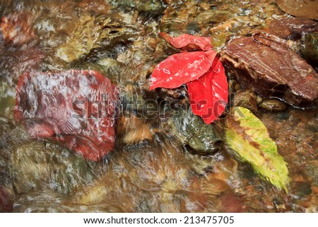 Red Leaf in brooks - stock photo