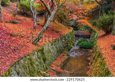 Red leaf in Kyoto Japan  - stock photo