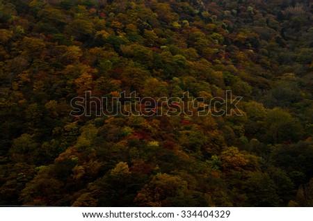 red leaf in Nikko - stock photo