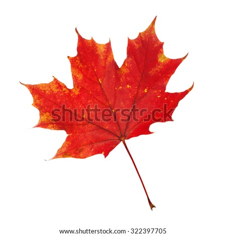 Red Leaf on White Background - stock photo