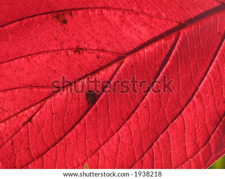 Red leaf structure