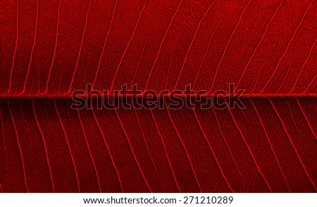 red leaf texture of the Plumeria tree