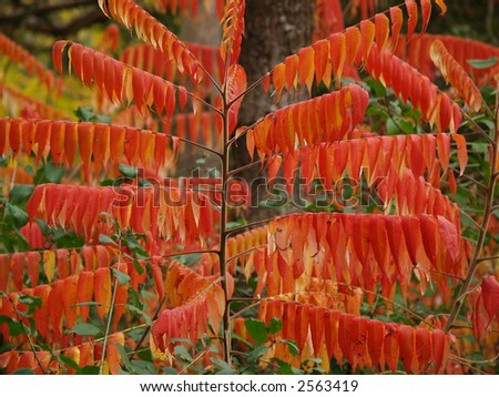 red leafs - stock photo
