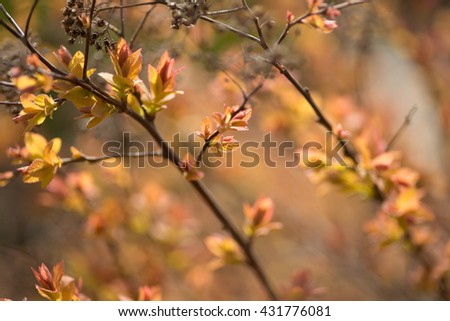 Red leafs on the branches, background - stock photo